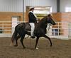 2181 stallions4to6 15