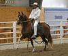 2231 stallions bozal