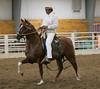 2260 stallions bozal17