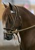 2217 stallions bozal 17