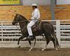 2227 stallions bozal 17