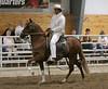 2238 stallions bozal 17
