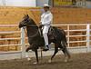 2241 stallions bozal 17