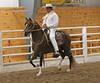 2229 stallions bozal 17