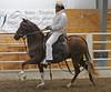 2237 stallions bozal