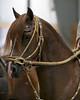 2219 stallions bozal 17