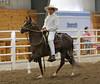 2240 stallions bozal 17