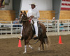 2257 stallions bozal17