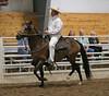 2239 stallions bozal 17