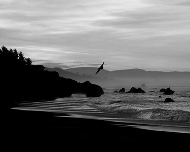 """ Brookings, Oregon "" .... (b&w)"