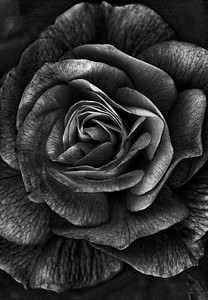 """ A Rose By Any Other Name ... ''"