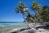 Monuriki Palms - Beach View