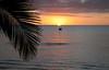 Sunset Palm Silhoette