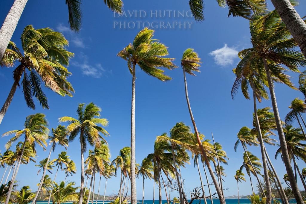 Palm Skies Best - Blue Lagoon