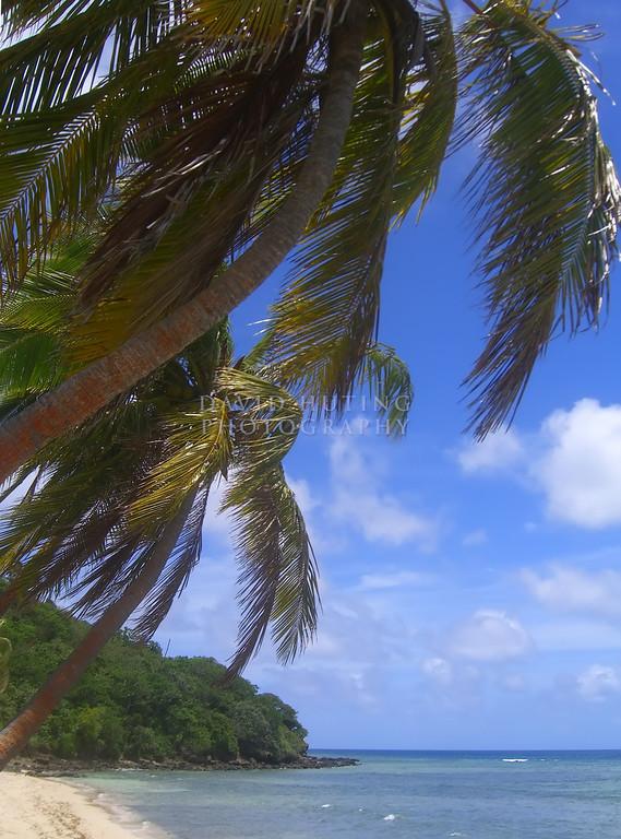 Palm Scene<br /> (Vertical)