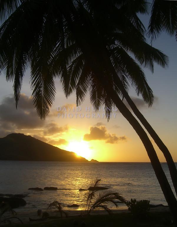 Palm Sunset Silhouette