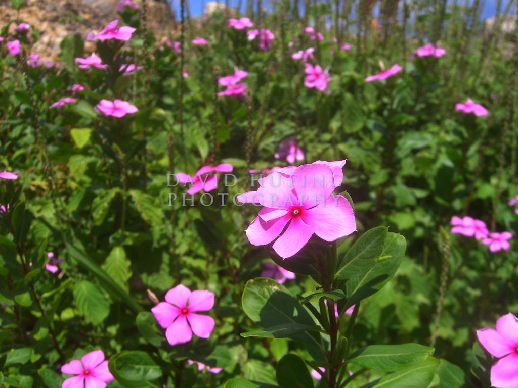 Purple flowers!