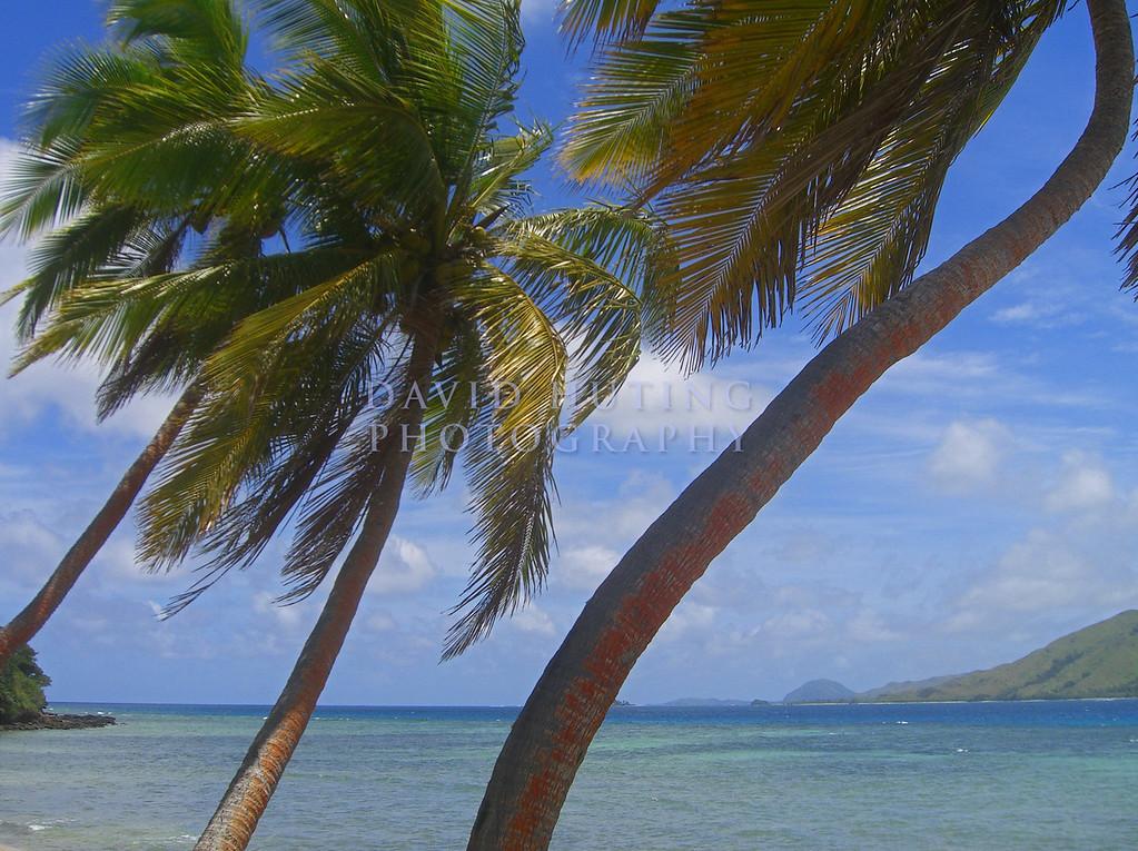 Tropical View from Tavewa Island