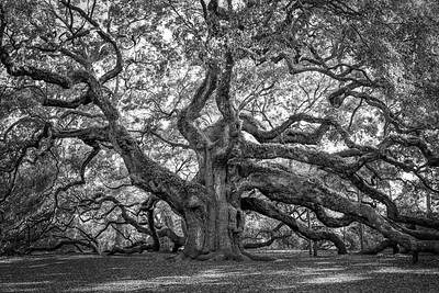 Angel Oak Fine Art Photograph