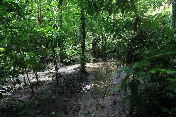 Spacer po dżungli