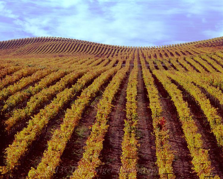 Sonoma Vineyards