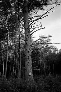 Olympus XA, Kodak Tri-X 400, D-76, August 2016