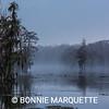 Louisiana Swamp Series