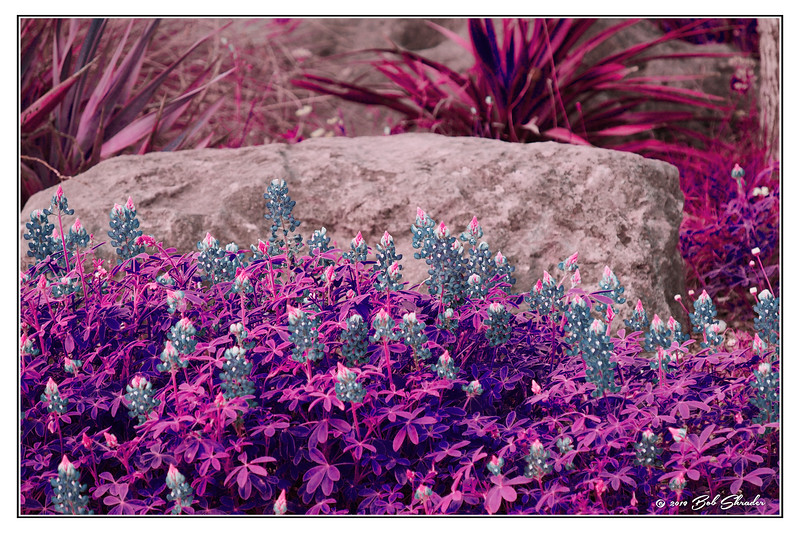Flowers in Faux Infrared