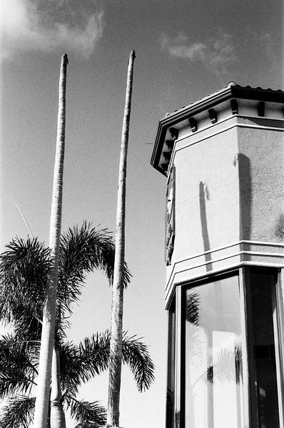 3rd Avenue Palms