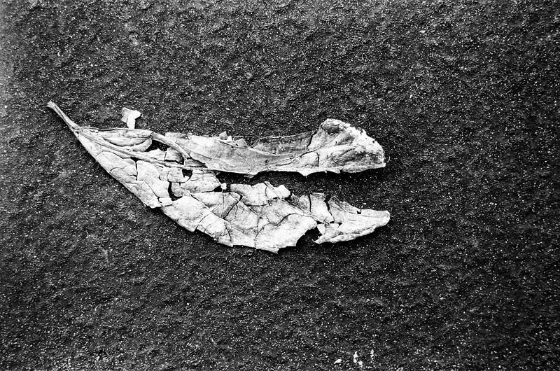 Loner Leaf