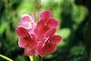 Orchids at Cairns Botanical Gardens