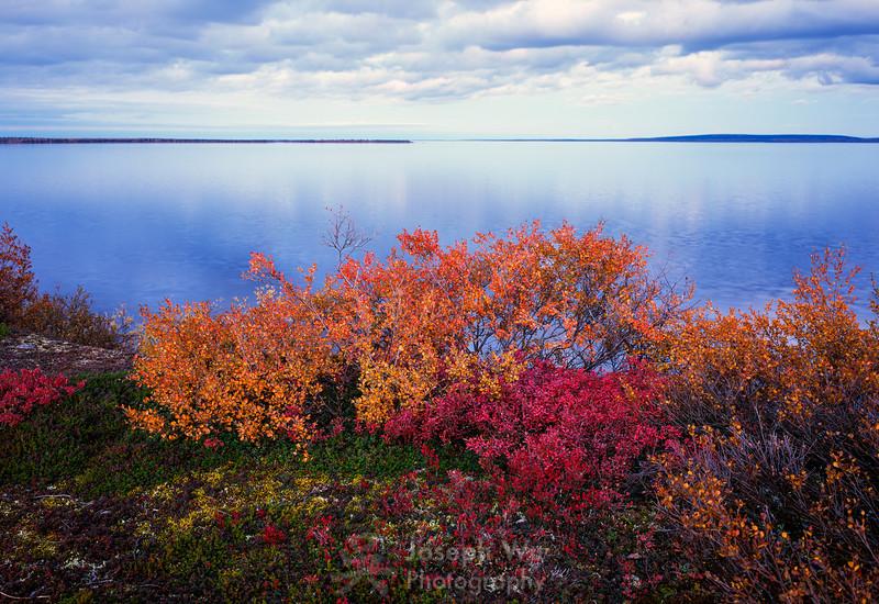 Vibrant Tundra