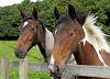 Horse Spectators