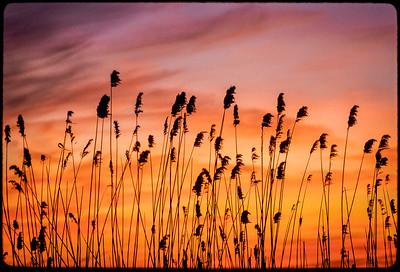 NJ Meadowlands_7740