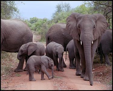 Edeni game reserve, South Africa