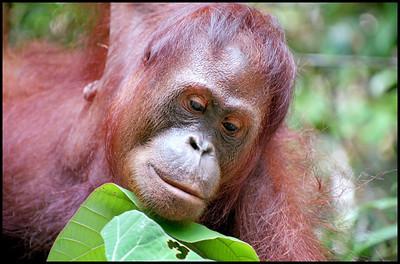 Semengok, Borneo, Malaysia