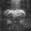 Threeflower no.2