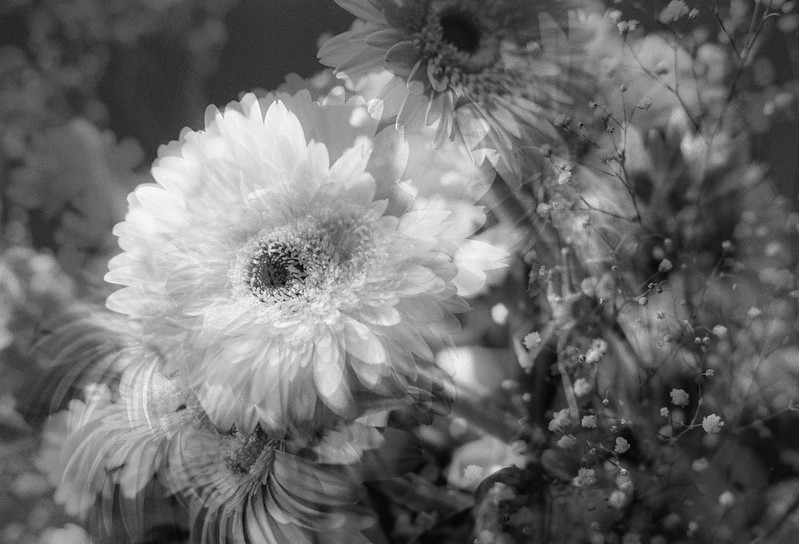 Daisies in Three no. 2