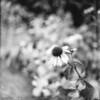 1 ND8 f2.8 @ 1/500<br /> Flower