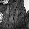 7 ND8 f2.8 @ 1/500<br /> Tree. FP jog in crack