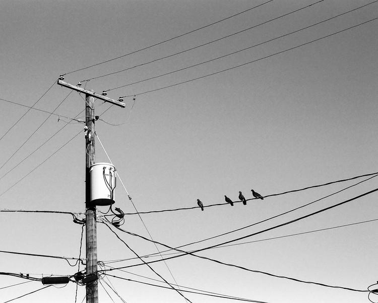 Pigeon Power