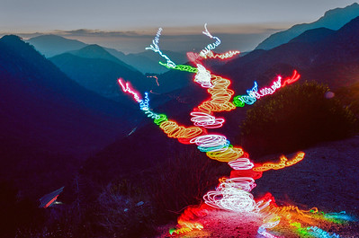 Rainbow Tree