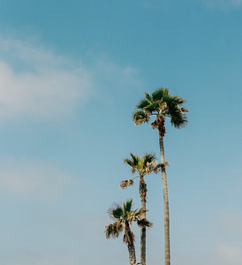 Palms, Newport Beach