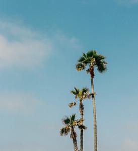 Palms, Newport Beach