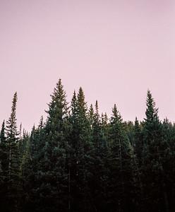 Pines at Dusk #2