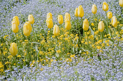 Purple and Yellow, Filoli Fuji Pro 400H