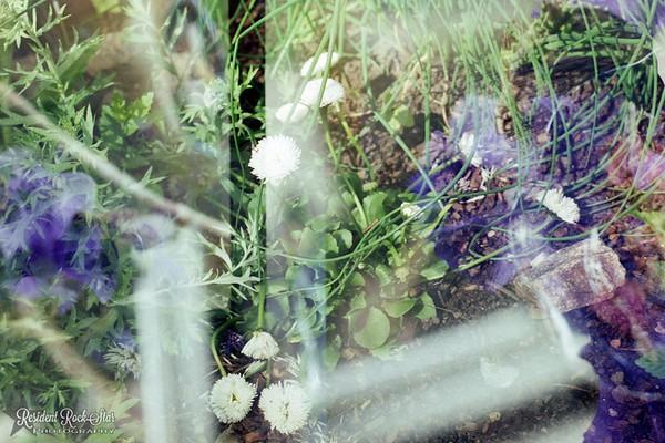 Garden Double Exposure