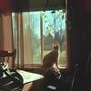 Leo in the window