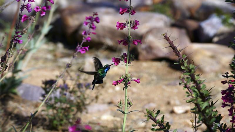 I ♥ Hummingbirds