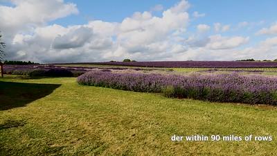 Lavender Hill Barn Farm